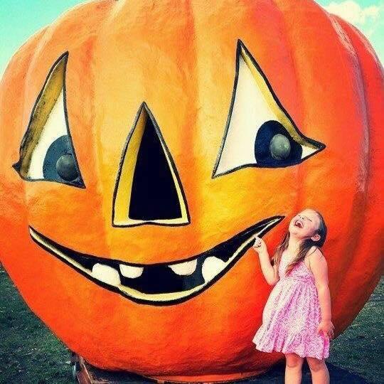 pumpkin patch huntington tx